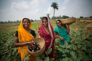 Three women in India farming eggplant